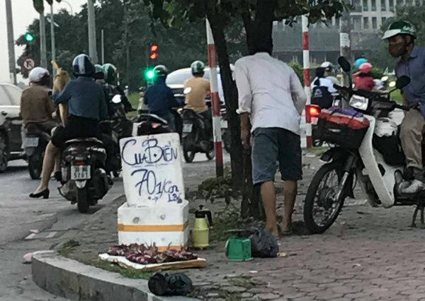 Cua biển Cà Mau siêu rẻ bày bán tại vỉa hè Hà Nội có nguồn gốc từ đâu?