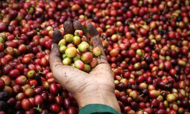 Giá nông sản hôm nay 27/9: Giá tiêu tăng nóng 1000 đồng/kg, giá cà phê tăng nhẹ