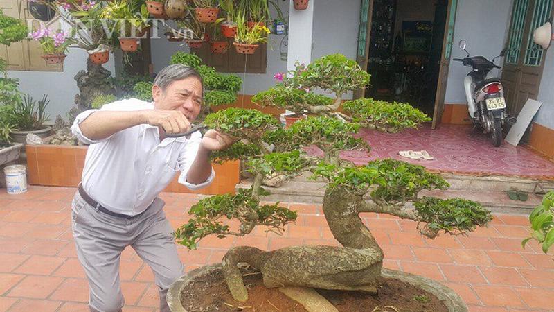 Cận cảnh cây duối lùn của gia đình ông Tạ Ngọc Liễn.